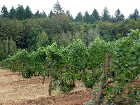 Kelly Fox wines ケリー・フォックス・ワインズ